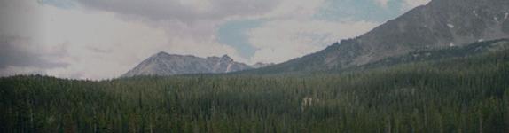 Environmental Stewardship Banner